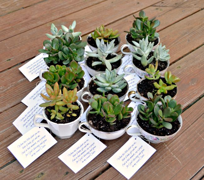 Teacup Succulent Party Favors