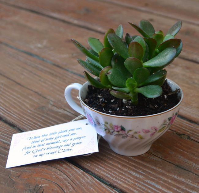 Teacup Succulent Favor