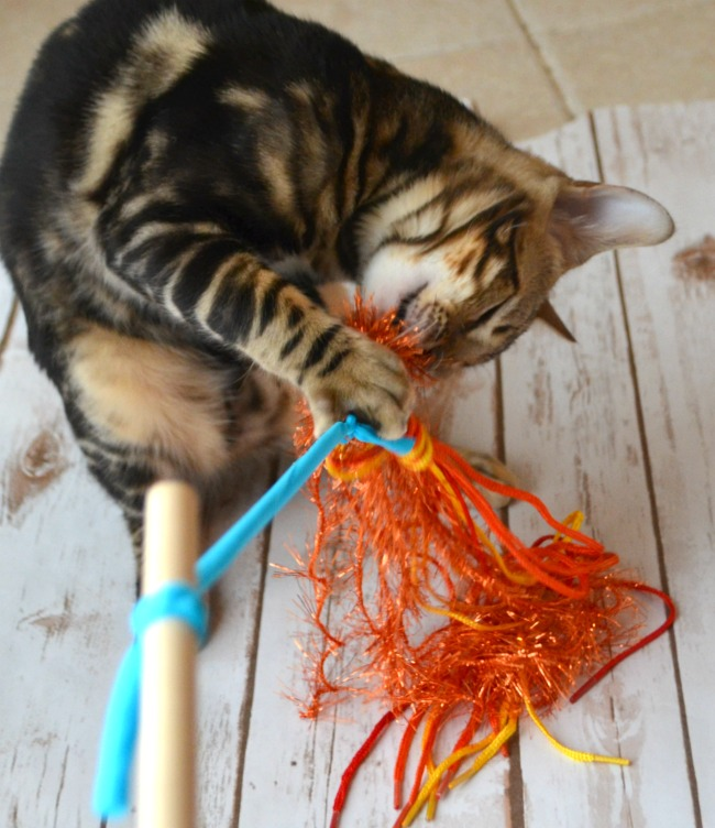 cattoy9