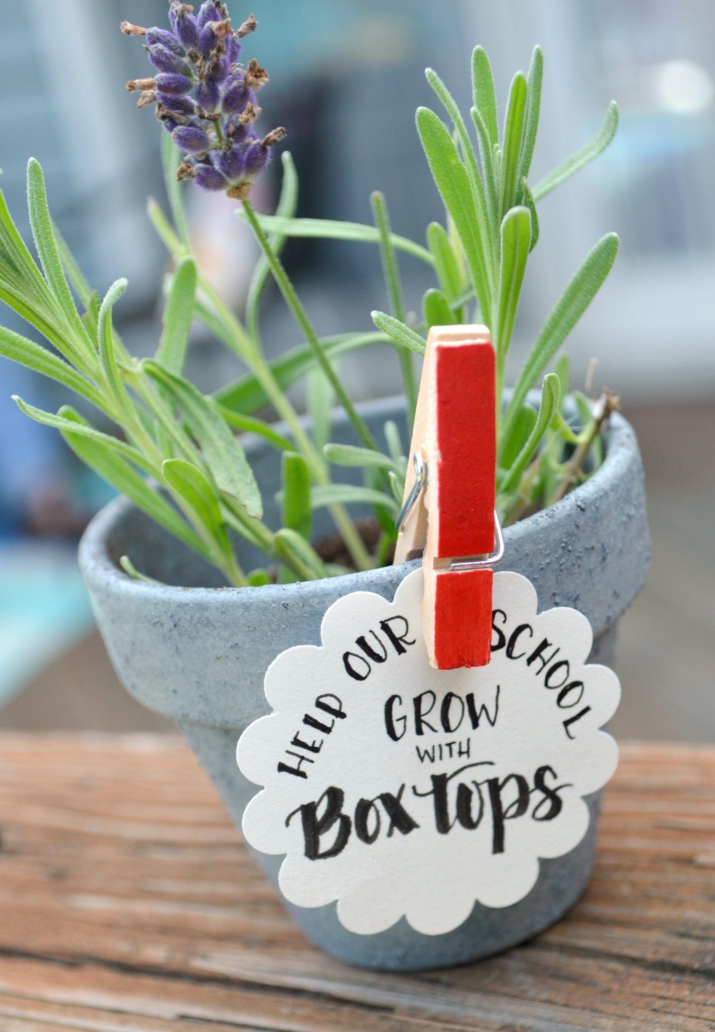 boxtoppot6 - Copy